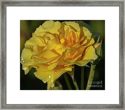 Sparkle N Shine Rose 7 Framed Print