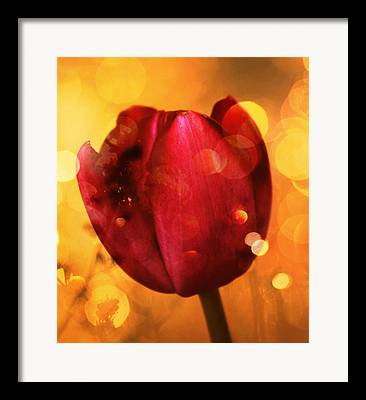 Mauve Flower Framed Prints
