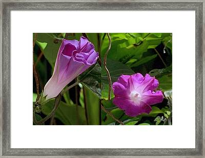 Sparkle Pink Flower From The Caribbean Framed Print by Navin Joshi