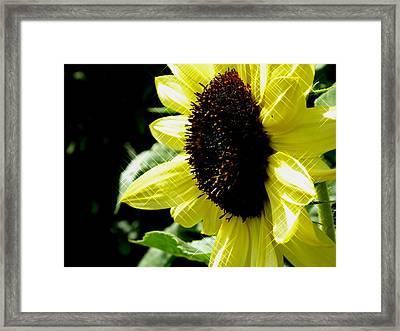 Sparkle Sunflower Framed Print