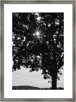Sparkle Through The Treetops Framed Print by Christi Kraft