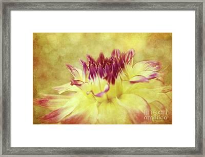 Sparkling Dahlia Framed Print