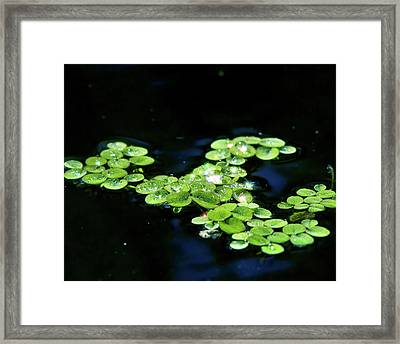 Sparkling Dewdrops Framed Print by Mark Andrew Thomas
