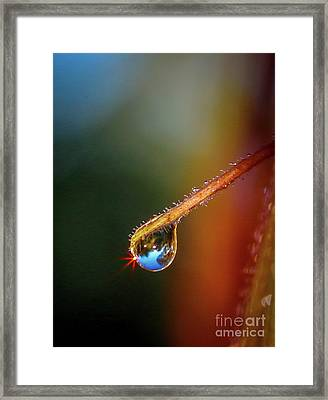 Sparkling Drop Of Dew Framed Print