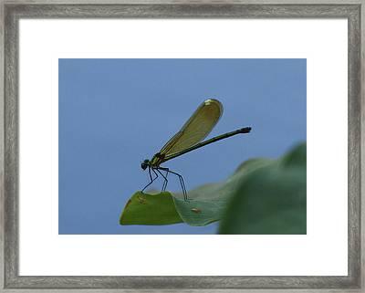 Sparkling Jewelwing #2 Framed Print
