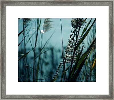 Sparkling Lights Framed Print by Susanne Van Hulst
