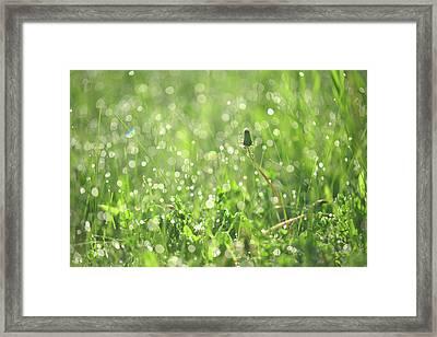 Sparkling Morning. Green World Framed Print by Jenny Rainbow