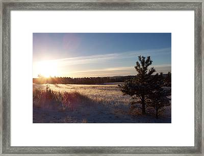 Sparkly Morning Framed Print