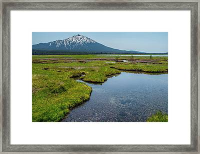 Sparks Spring Bloom  Framed Print