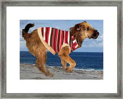 Sparky Framed Print by Al Bourassa