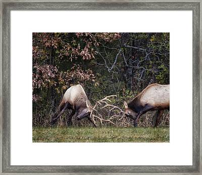 Framed Print featuring the photograph Sparring Bachelor Bulls In Boxley Valley by Michael Dougherty