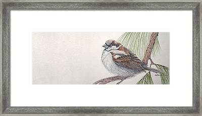 Sparrow Among The Pines Framed Print by Leslie M Browning