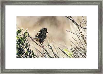 Snarky Sparrow Framed Print