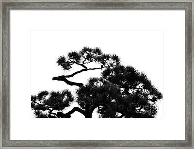Sparrow In A Tree Framed Print