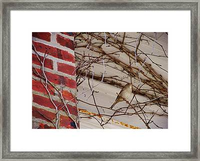 Sparrow Framed Print by JAMART Photography
