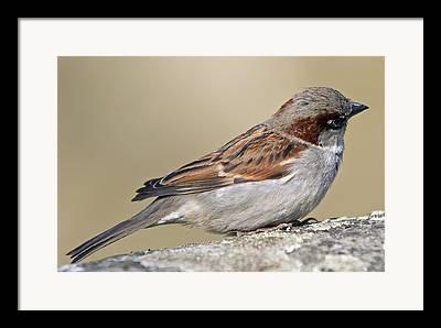 Passeriformes Framed Prints