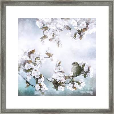 Sparrow On Cherry Branch Framed Print by Shanina Conway