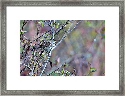 Sparrow On Tree Branch In Bushes Framed Print