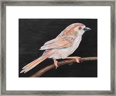 Sparrow Framed Print by Rajesh Chopra