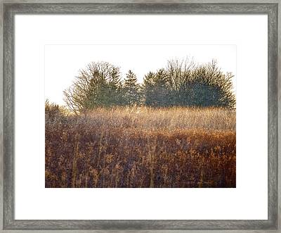 Sparrows Carry Her Name Framed Print