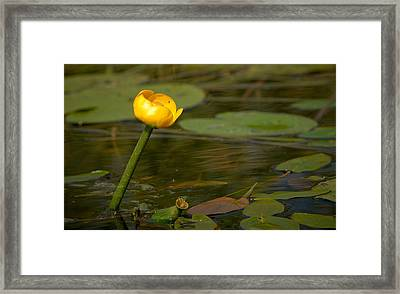 Framed Print featuring the photograph Spatterdock by Jouko Lehto