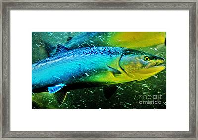 Spawning Home Framed Print by Frank Larkin