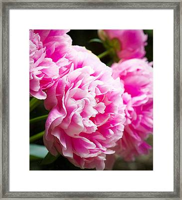 Special Beauty Framed Print