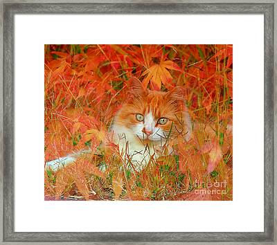 Special Kitty Framed Print