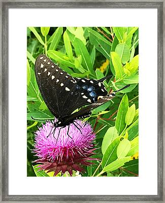 Special Needs Framed Print