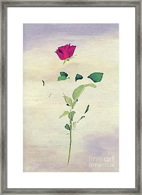 Special Rose Framed Print by Svetlana Sewell