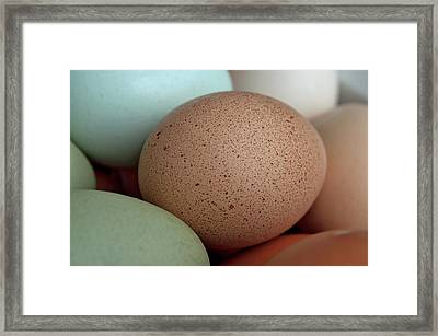 Speckled Brown Egg Framed Print by Cathy Mahnke