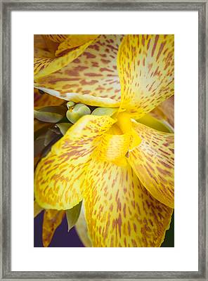 Framed Print featuring the photograph Speckled Canna by Christi Kraft