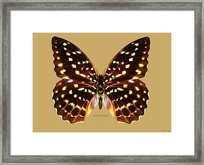 Speckled Hen Butterfly Framed Print by Walter Colvin