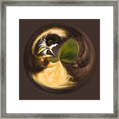 Framed Print featuring the photograph Spectacled Owl Orb by Bill Barber