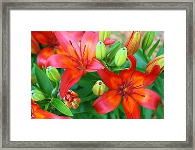 Spectacular Day Lilies Framed Print by Bruce Bley