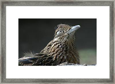 Speed Demon Framed Print by Fraida Gutovich