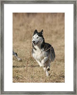 Speed Freak Framed Print