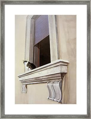 Spello Cat Framed Print