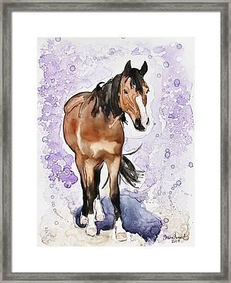 Spencer Framed Print by Shaina Stinard