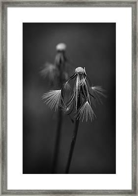 Spent Wishes Framed Print