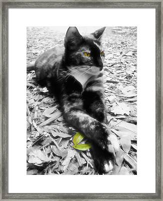 Sphinx Framed Print by JAMART Photography