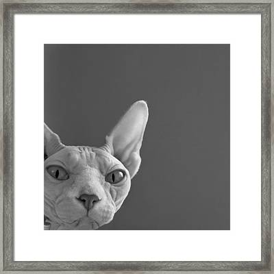 Sphynx In Black And White Framed Print by Glennis Siverson