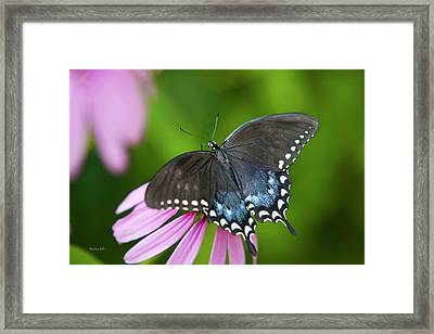 Spice Of Life Butterfly Framed Print
