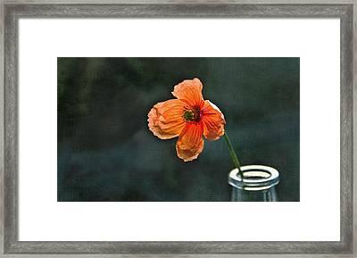 Spicy Red Poppy Framed Print