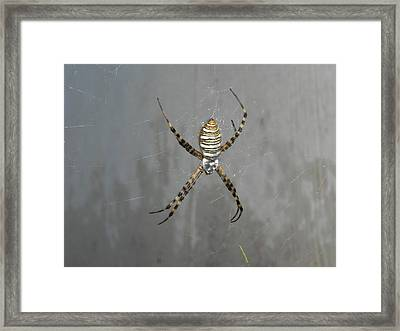 Spider Framed Print by Adrienne Petterson