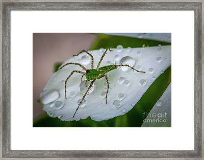 Spider And Flower Petal Framed Print
