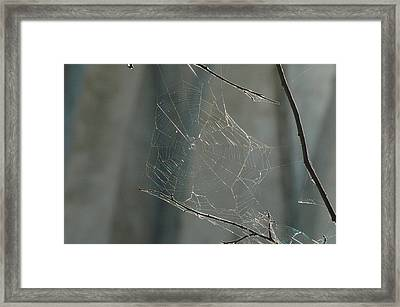 Spider Art Framed Print by Trish Hale