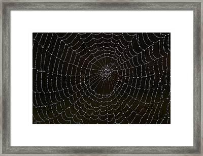 Spider Cobweb  Framed Print