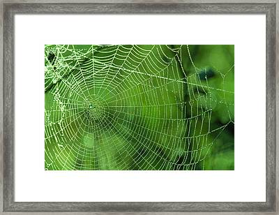 Spider Dew Framed Print by Paul Marto