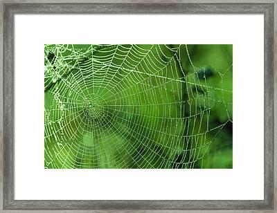 Spider Dew Framed Print